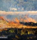 آتش سوزی در بستر زاینده رود