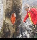 آتش سوزی در جنگلهای اشکورات گیلان