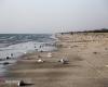 معمای مرگ گربه ماهی ها در ساحل جاسک