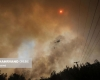 تصاویری دلخراش از آتش سوزی ترکیه